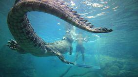 n-tv Dokumentation: Tierisch tödlich - Willkommen in Australien 18