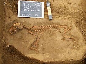 Alte Hundegräber wie dieses von der Janey-B.-Goode-Fundstelle in der Nähe von Brooklyn, Illinois lieferten genetisches Material für die Studie.