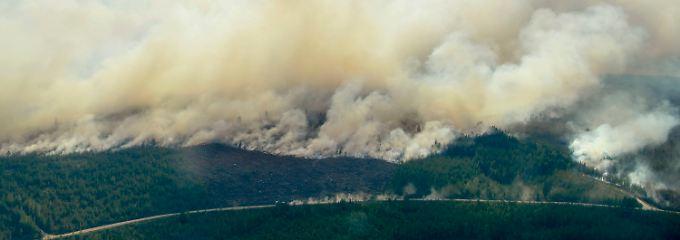 Internationale Hilfe angefordert: Waldbrände in Schweden breiten sich aus