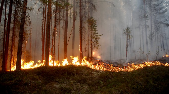 Viele kleinere Waldbrände in Schweden konnten gelöscht werden, doch die größten Feuer wüten noch immer.