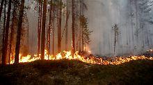 Kampf gegen Waldbrände: Deutsche Feuerwehrleute helfen Schweden