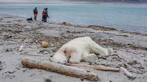 """Nach Attacke auf Deutschen in Spitzbergen: """"MS Bremen""""-Besatzung tötet einen Eisbären"""