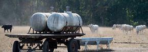 Einbußen bei der Erntebilanz: Landwirte warten sehnlichst auf den nächsten Regen