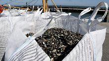 Hohe Nachfrage in Belgien: Muschelfischer hoffen auf höhere Preise