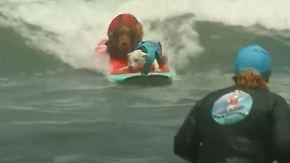Tierisches Surf-Vergnügen: Hunde geben auf Kaliforniens Wellen alles