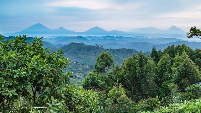 Tropischer Regenwald in Uganda, Afrika.