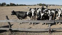 Klöckner gegen pauschale Hilfen: Kabinett geht gegen Futterknappheit vor