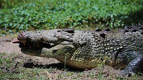 n-tv Dokumentation: Tierisch tödlich - Willkommen in Australien 10