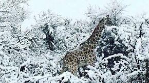 Kaum zu glauben, aber wahr: Wintereinbruch überrascht Südafrikas Tierwelt