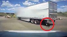 Kaum zu glauben, aber wahr: Fahrer vergisst an Truck angeleinten Hund