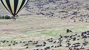Entspannt reisen zwischen Tier und Natur: Hier lässt sich der Großstadttrubel am besten vergessen