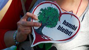 Aktivisten feiern am Hambacher Forst: Rodungsstopp kostet RWE Millionen