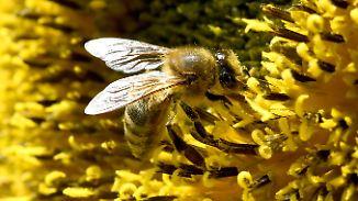 Mehr Geld, weniger Gift: Regierung will Insekten besser schützen