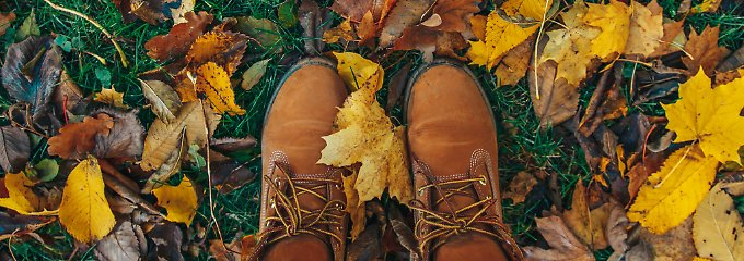 Wohin mit den Blättern?: Der richtige Umgang mit Laub im Garten