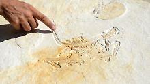 "Mehr Vogel als Dinosaurier: Forscher löst Rätsel um ""Phantom-Fossil"""