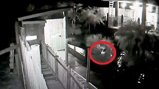 Überwachungskamera filmt Biss: Krokodile attackieren nächtlichen Gehege-Eindringling