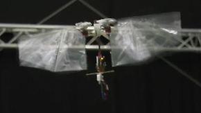 Flinker Flattermann: Micro-Drohne imitiert Insektenflug