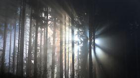 Bis minus vier Grad in der Nacht: Winter naht trotz sonnigen Freitags