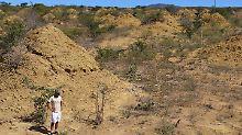 Fast so alt wie die Pyramiden: Termitenhügel stehen seit 4000 Jahren