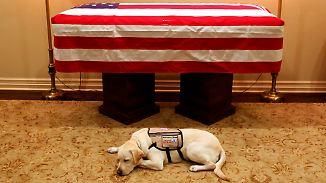 Treu bis über den Tod hinaus: Labrador Sully erweist Bush die letzte Ehre