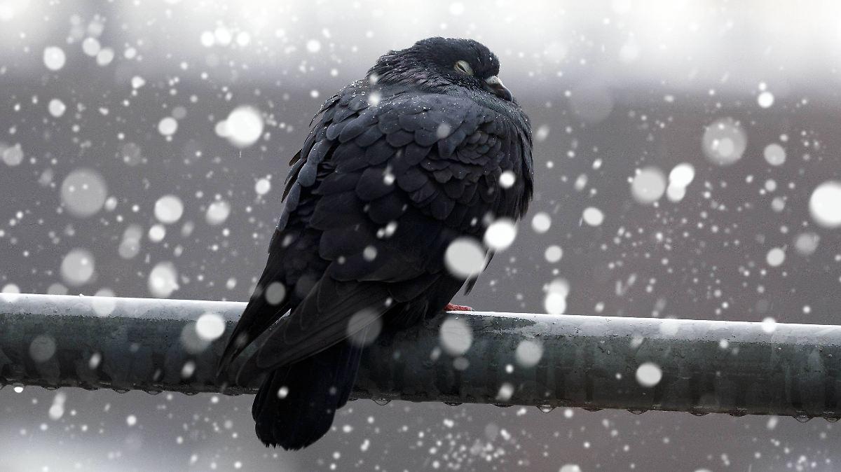 Vorsicht vor Schnee- und Graupelschauern