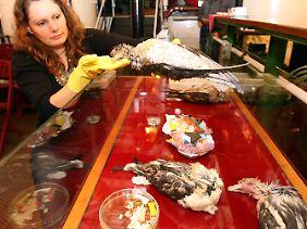 Greenpeace protestiert eindrücklich mit an Plastikteilen verstorbenen Vögeln gegen den Müll in den Meeren.