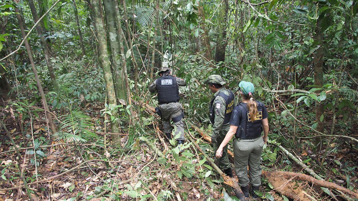 Tierbestand in Wäldern sinkt drastisch