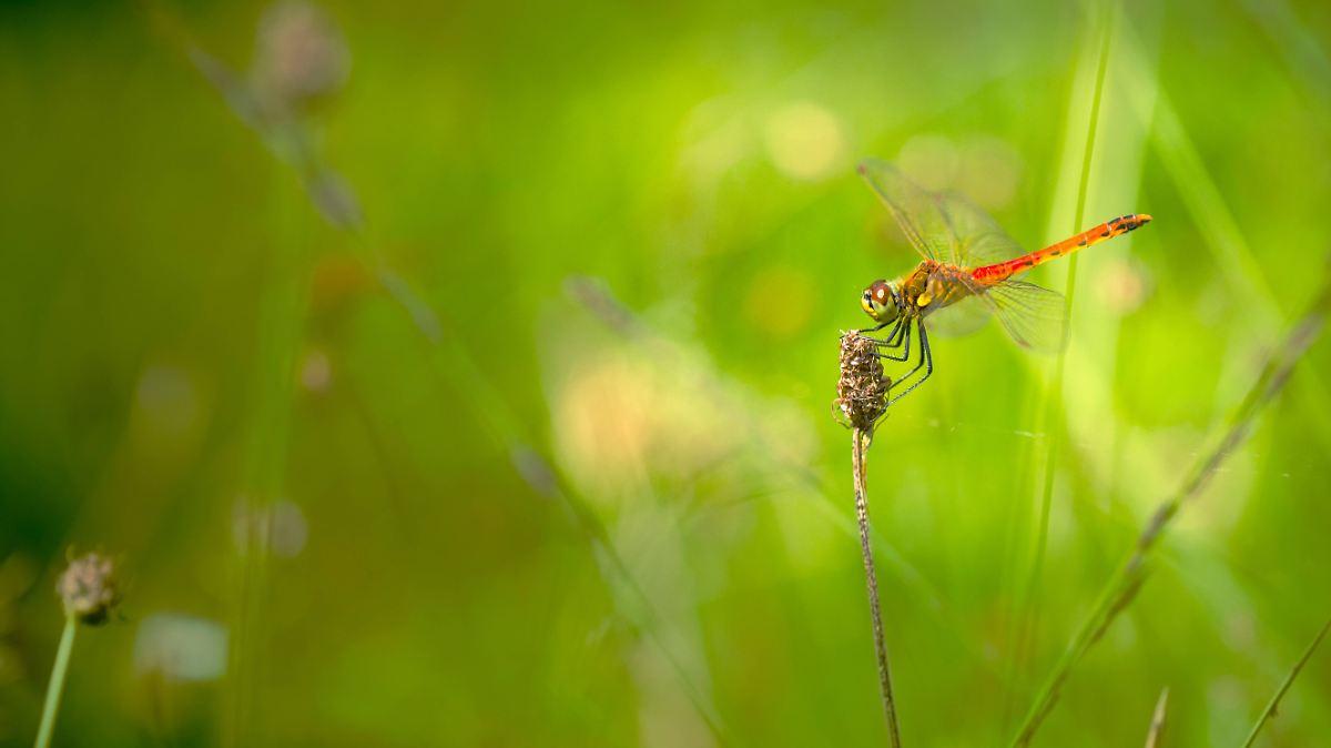 Die Insekten in Deutschland verschwinden