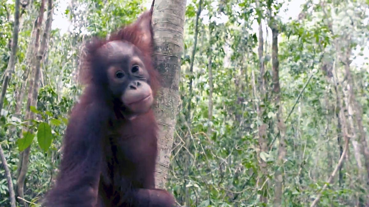 Palmöl-Bauern legen wohl verheerende Waldbrände