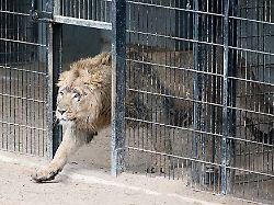 Moderne Zoos - Artenschutz oder Gefängnis?