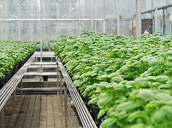 Aquaponik - Landwirtschaft der Zukunft?
