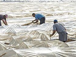 Was hilft den Bauern in der Corona-Krise?