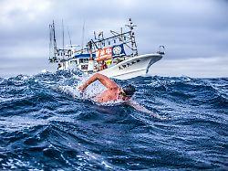 Ocean's Seven: Extremschwimmen mit Haien und Quallen
