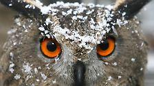 Sanft, weiß, sechseckig: Das Geheimnis der Schneeflocken