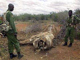 Die Ranger haben es schwer. Künftig will Südafrika unbemannte Flugkörper gegen die Wilderer einsetzen.