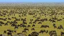 Naturdokumentation ohne Flecken: Schöne, heile Serengeti