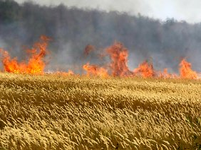Russland wurde im vergangenen Sommer von einer Dürre heimgesucht.