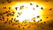 Mehr als Licht und Wärme: Die Sonne