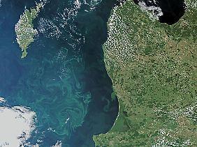 Algenblüte auf der Ostsee: Die Satellitenaufnahme zeigt das Danziger Becken und die Ostsee vor Kaliningrad und Litauen sowie das südliche Ende Gotlands. (Archivbild vom 21.07.2010)