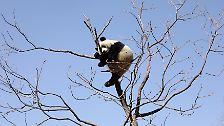 Babyhai, Riesenpanda, Wallaby: Die fabelhafte Welt der Tiere