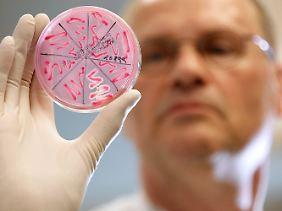 Im mikrobiologischen Labor des Asklepios-Klinikums Hamburg-Altona: Petrischale mit einer EHEC-Bakterienkultur.