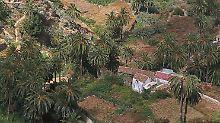 Kräftige Steigungen sind auf La Gomera nichts Ungewöhnliches - selbst die Palmen wachsen oft auf hügeligem Untergrund.