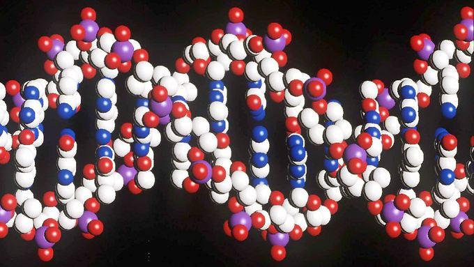 Ein Modell eines menschlichen DNA-Stranges mit der doppelten Helix-Struktur.