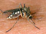 Frage & Antwort, Nr. 177: Warum juckt ein Mückenstich?