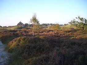 Einsame Reetdach-Häuser inmitten von Heidekraut in der Dünenheide.