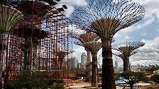 """Vom Balkongärtner zum Samenbomber: """"Urban Gardener"""" erobern die Städte"""
