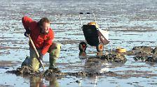 Unesco-Weltnaturerbe: Das Wattenmeer