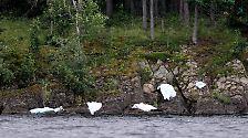 Anschlag in Oslo, Massaker im Ferienlager: Das Paradies wird zur Hölle