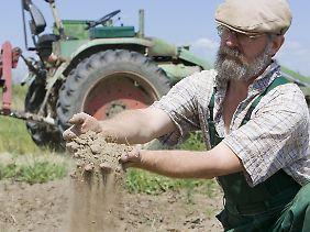 Brandenburg im Juni dieses Jahres: Bauer Hans-Peter Frucht zeigt, wie ausgetrocknet der Boden ist.