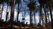 Das Amazonasgebiet ist bekannt für den illegalen Goldabbau.